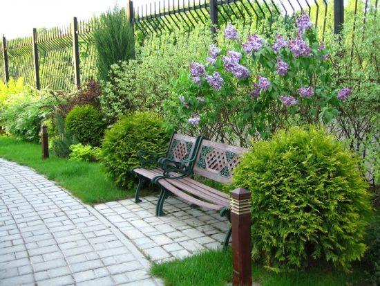 Красивые кустарники в дизайне сада