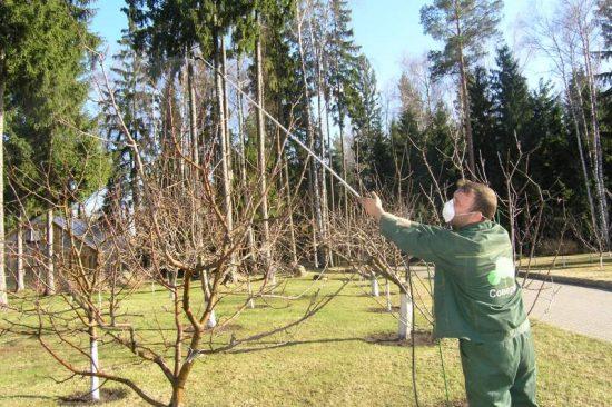 Опрыскивание яблонь весной