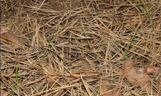 Готовим грядки к посадке капусты