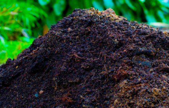 Подготовка почвы к посадке капусты
