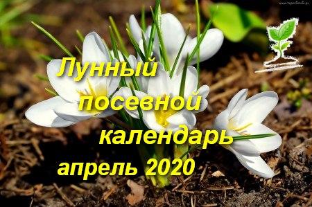 Лунный календарь садоводов огородников на апрель 2020 года