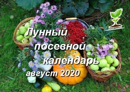 Лунный календарь садоводов и огородников на август 2020 года