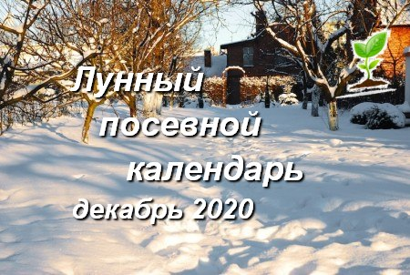 Лунный календарь садоводов и огородников на декабрь 2020 года
