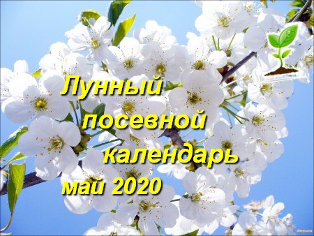 Лунный календарь садоводов и огородников на май 2020 года