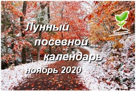 Лунный календарь садоводов и огородников на ноябрь 2020 года