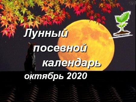 Лунный календарь садоводов и огородников на октябрь 2020 года