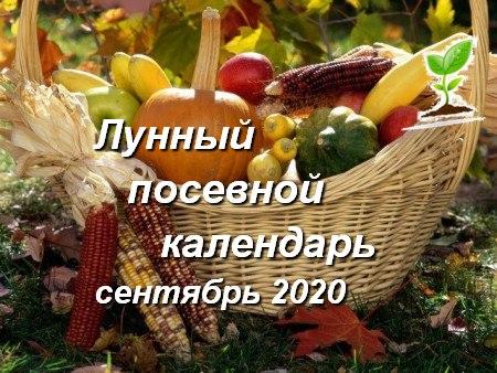 Лунный календарь садоводов и огородников на сентябрь 2020 года