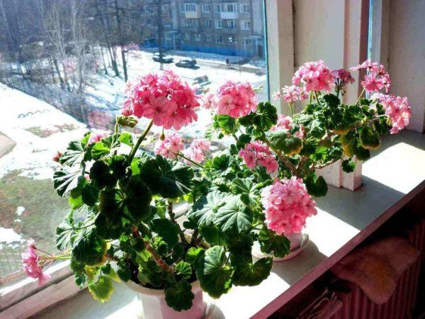 Комнатные цветы в феврале