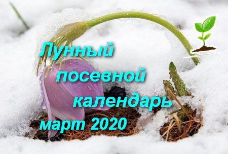 Лунный посевной календарь садоводов и огородников на март 2020 года