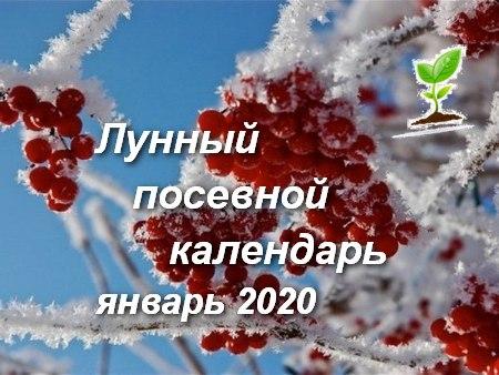 Лунный посевной календарь январь 2020