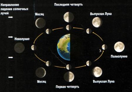 Лунный календарь садоводов и огородников для Сибири на 2020 год