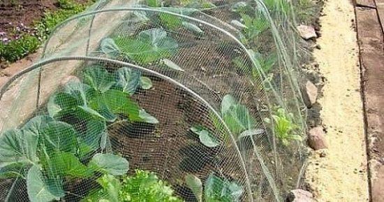 Методы борьбы с капустной совкой