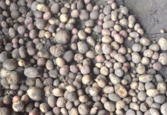 Обработка мелкой картошки