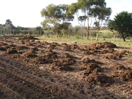 Удобрение почвы перед посадкой