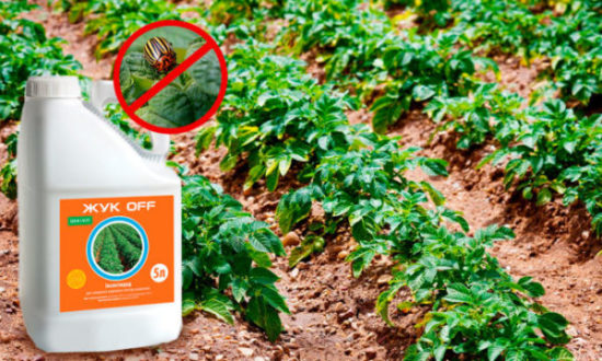 Эффективные препараты и средства от колорадского жука на картофеле