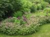 84cbe9cdc9e497ebddb551261e1c4a44--shade-garden-landscaping