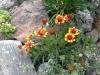 gajlardiya v sadu (8)