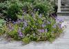 ornamental planting new-jersey clc landscape design 22