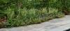 ornamental planting new-jersey clc landscape design 23